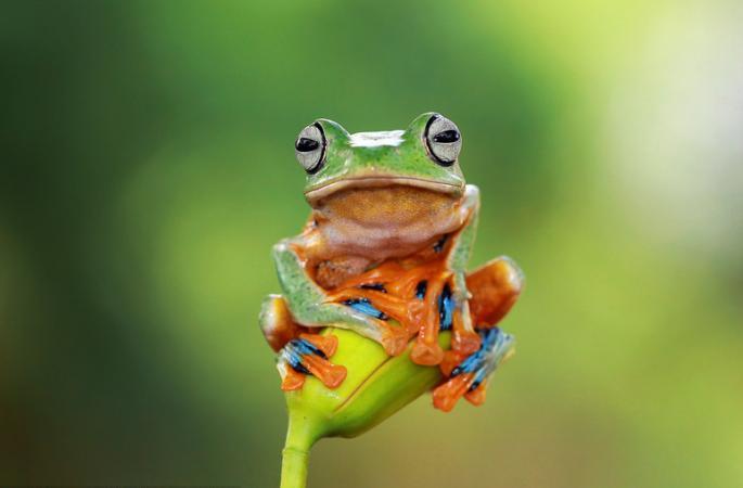 인도네시아 개구리 꽃가지 안고 폴 댄스