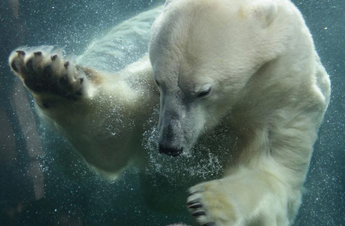 美 4살짜리 소년 북극곰과의 다정한 교감