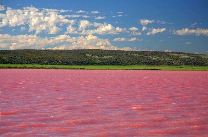 핑크빛의 호수