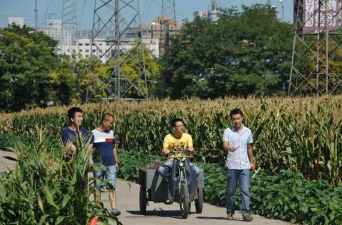 베이징 삼환 내 유일한 농밭…세계 최고가 농지