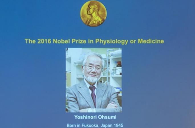 일본 과학자 오스미 요시노리, 2016년 노벨 생리의학상 수상