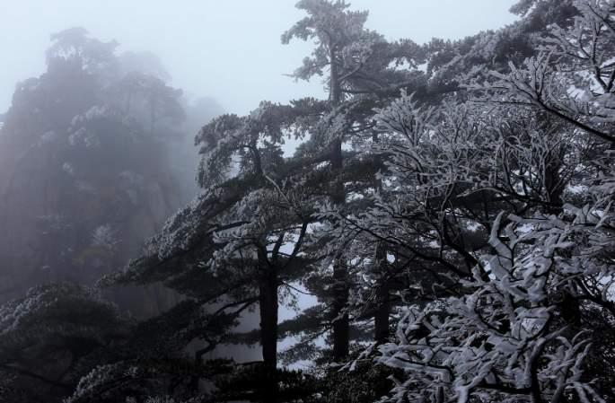 올해 겨울 황산의 첫 무송 기관, '얼음꽃 세계' 방불케