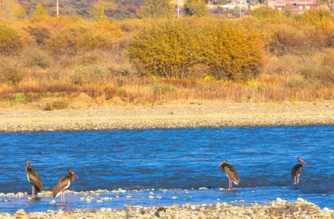 쓰촨 루훠 훠얼장구 습지, 먹황새들의 소중한 서식지