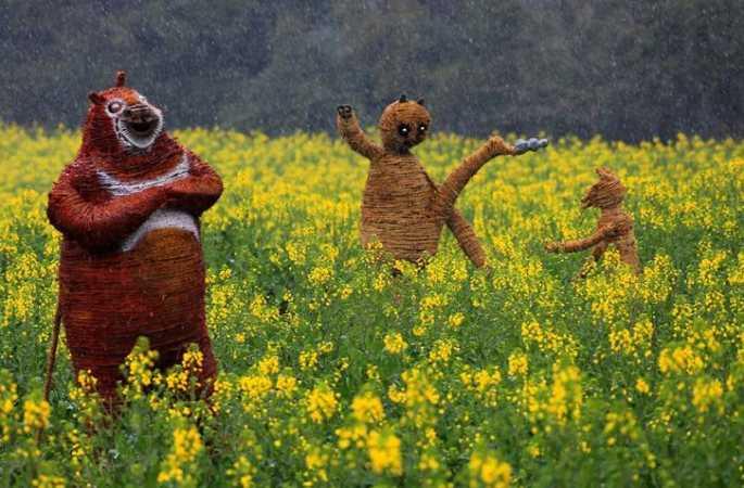 대박! 우위안 유채꽃밭에 나타난 귀여운 '새끼줄 캐릭터', 관광객 매료