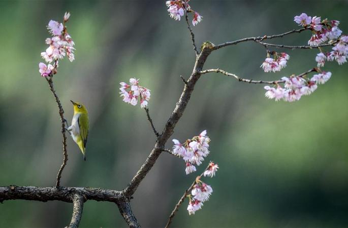 철새 봄 향기를 찾아