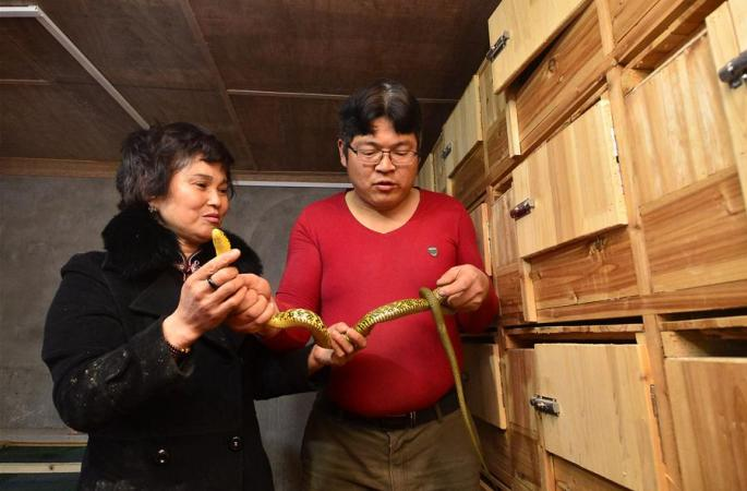 난창시 신젠구: 특색 있는 양식업 발전으로 농민 수입 증가에 일조