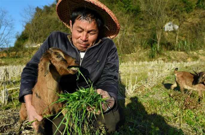 양 사육농 뤼위안신 부부의 빈곤탈출기