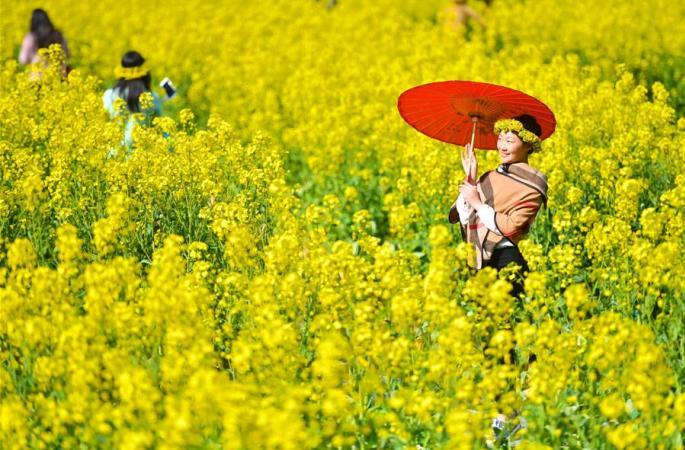 장시우위안, 봄나들이 붐 일어