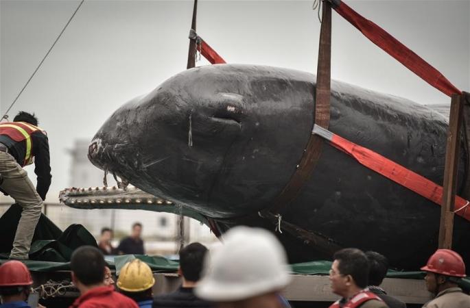 좌초된 향유고래 숨져