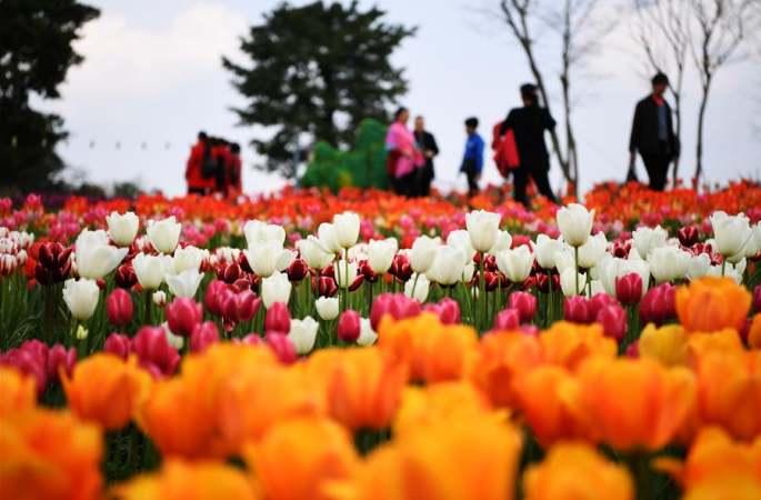 봄날의 꽃구경