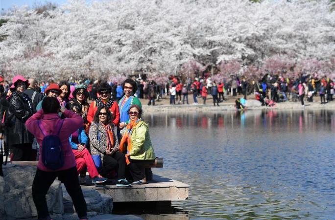 베이징 위위안탄: 벚꽃 만발, 관광객 맞아