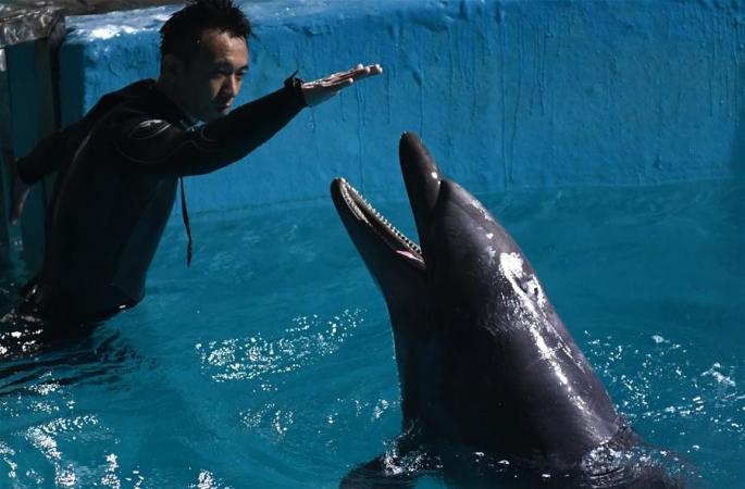 큰 돌고래 두마리 하얼빈에 정착