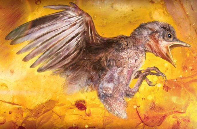 과학가, 최초로 호박에서 새끼 새 표본 발견