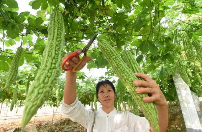 푸젠: 현대 고효률 농업으로 빈곤 퇴치