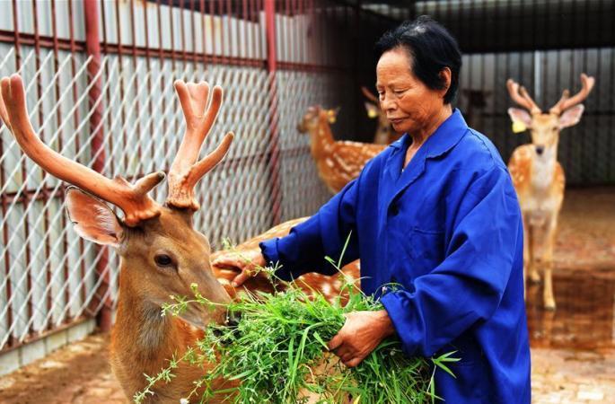 """허베이 헝수이:빈곤 구제 - """"사슴""""으로 치부"""