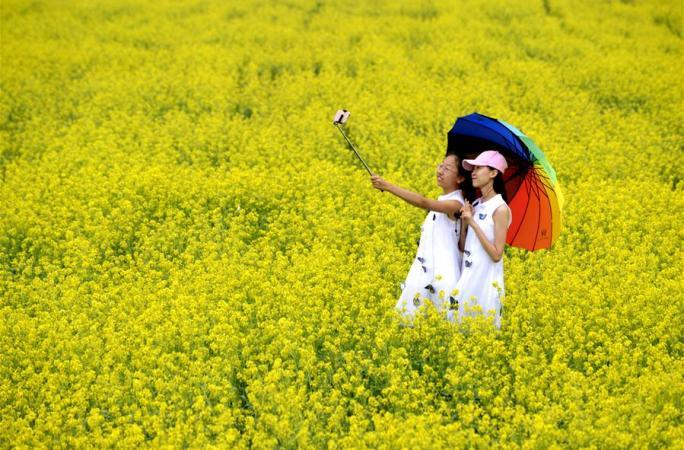 초원의 유채꽃 7월에 피어