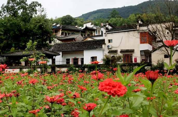 완난 타촨 옛 마을에 뽕나무 꽃과 후이파건축이 서로 어울려 그림같아