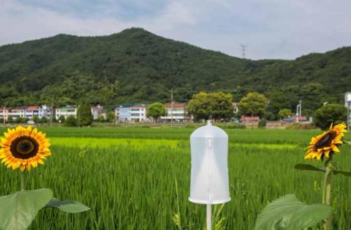 샤오산: 논밭 '작은 초롱'이 큰 역할 발휘해