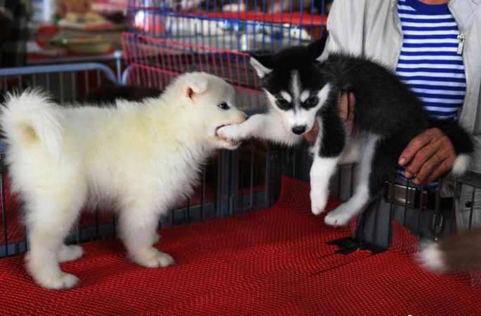 귀여운 애완 동물 창춘 농업박람회서 선보여