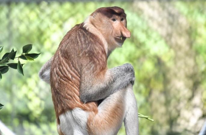 中 처음으로 멸종위기종 긴코원숭이 도입