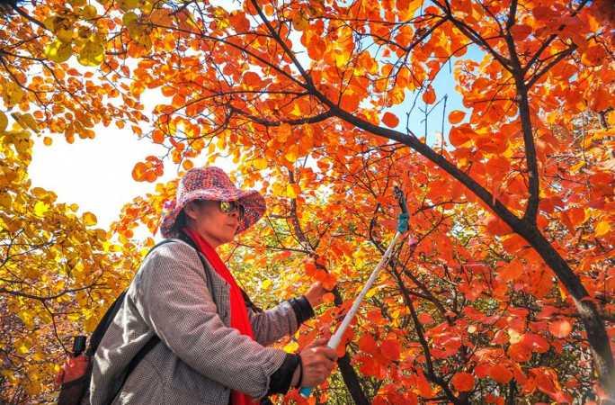 가을 단풍으로 곱게 물든 타이항산