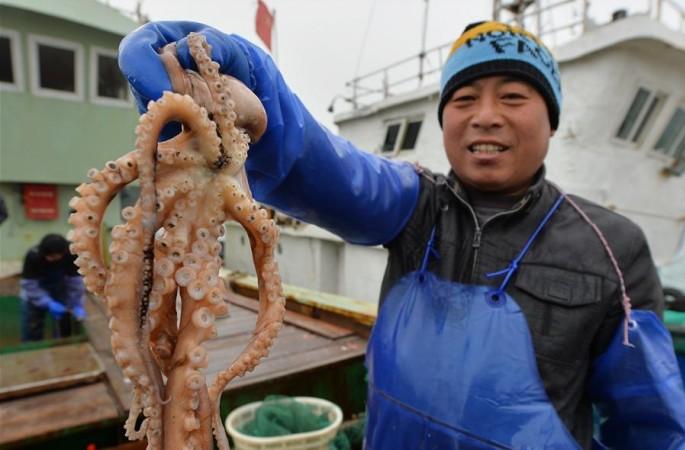 산둥 칭다오: 겨울철 고기잡이 만선 귀항