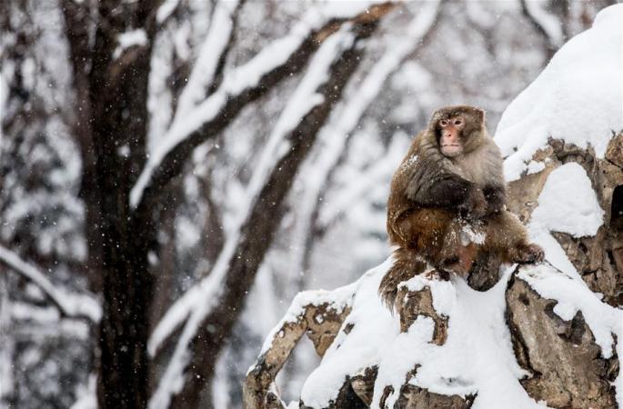 눈속에 혼자 서있는 원숭이