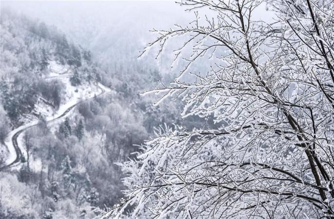 나무가 아름답게 우거진 친링 쯔바이산
