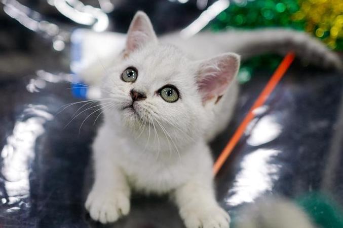 귀여운 고양이의 총동원