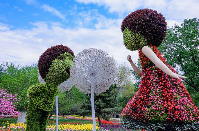 아름다움이 똑똑 떨어질 것 같은 베이징 식물원의 튤립 장관