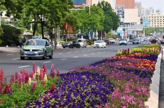 칭다오: 비단같이 펼쳐진 아름다운 꽃으로 성대한 회의 맞이
