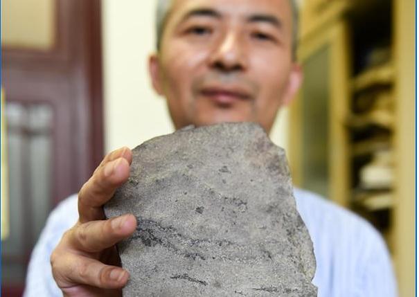지구상 가장 오래된 동물발자국 화석 중국서 발견