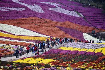 구이저우 마장: '국화경제'에 의한 시골관광 붐