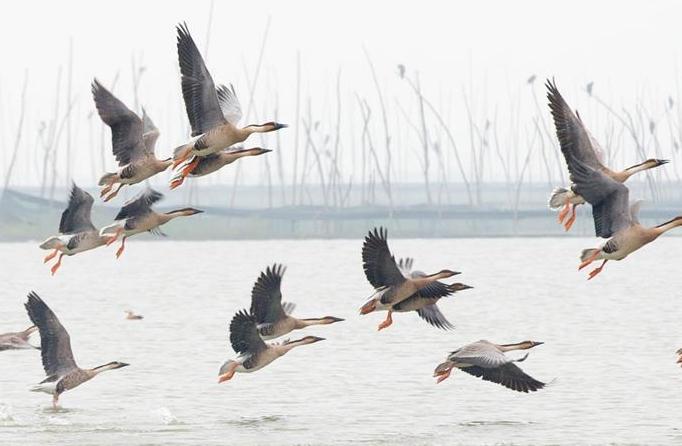장쑤 쉬이: '철새들의 낙원'으로 변신한 습지