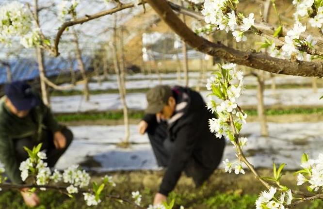 (뉴스 번역) 봄기운 가득한 비닐하우스