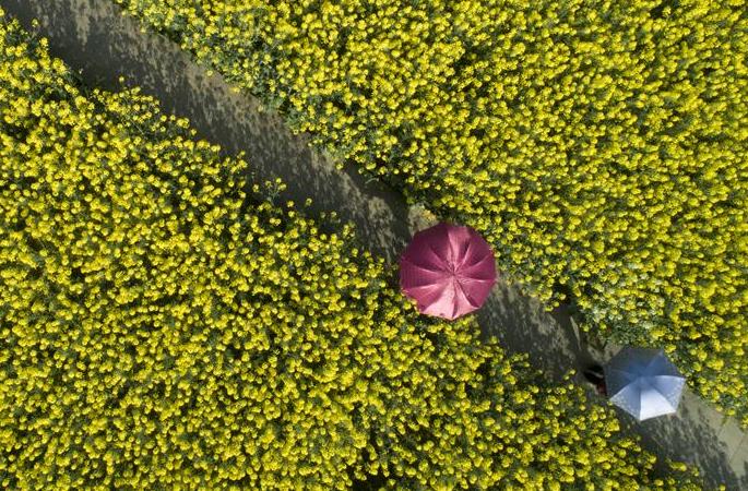 완연한 봄빛…봄꽃 만끽 최적의 타이밍