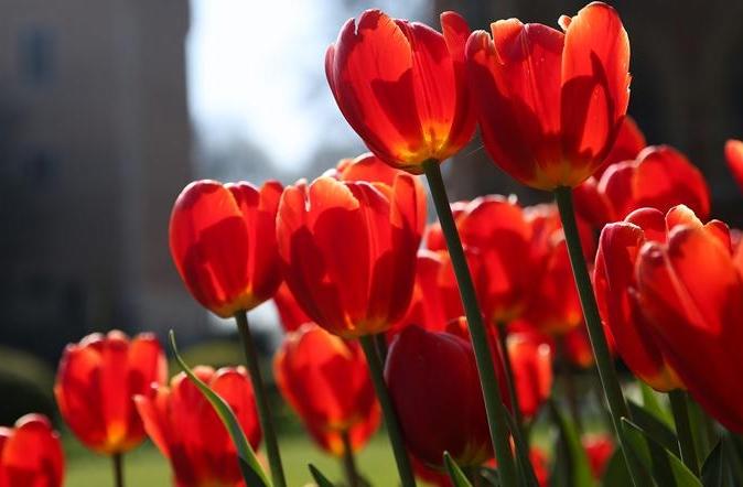 세계 원림 순례—벨기에 그루트 비즈가덴 캐슬