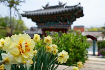 세계 원림 순례—한국 순천만국가정원