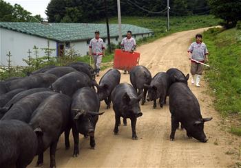 지린 푸쑹: 스마트 돼지 사육