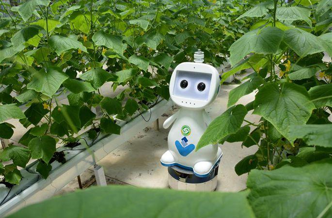 푸젠, 농사 짓는 로봇 발표…'스마트팜' 시대 '성큼'