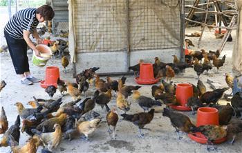허베이 우창: 산업 '패키지'로 빈곤탈출 도와
