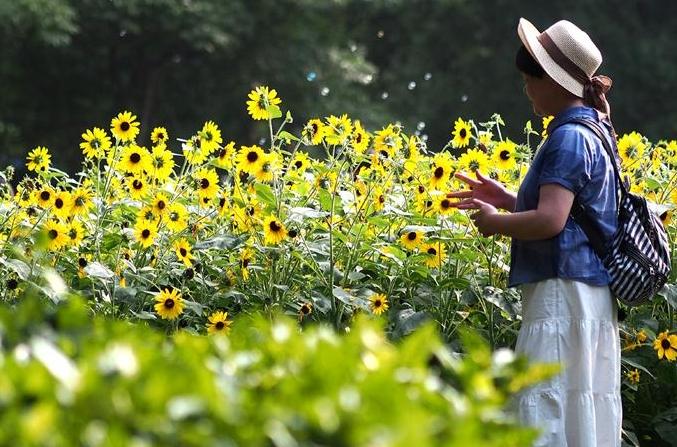 상하이: 장마와 잠시 작별한 사람들 꽃놀이에 나서