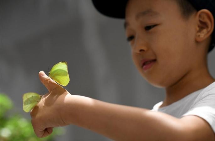 시안: 여름방학 맞아 곤충세계 관찰