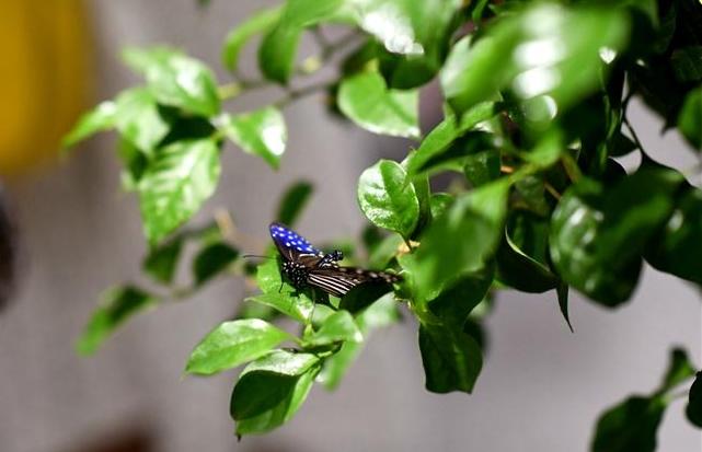 여름 나비의 춤