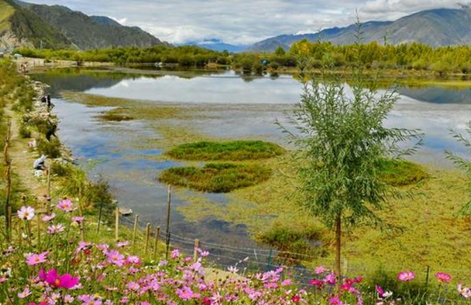 라싸: 가을빛으로 곱게 물든 금빛 연못