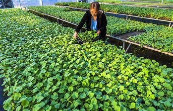 허베이 우이: 육묘 재배, 脫빈곤에 이바지