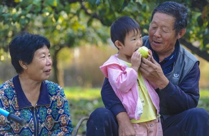 허베이 융칭: 배 향기 가득, 농가 소득 쑥쑥