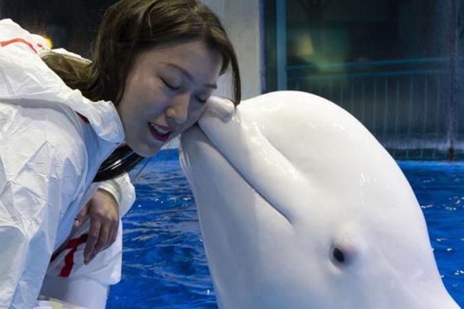 흰고래 조련사 짱밍예