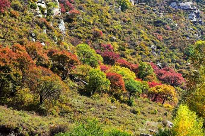 다칭산맥의 매력적인 가을 풍경