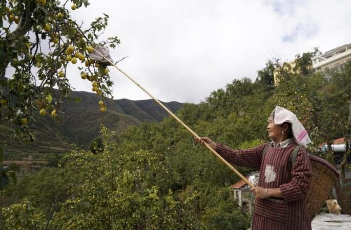 농촌 간이매점, 진촨 특산배 판로 개척 도와